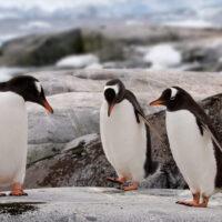 Penguins-Hokey-Pokey